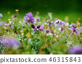 菊花,菊花,雨滴,菊花 46315843