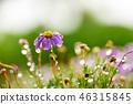 菊花,菊花,雨滴,菊花 46315845