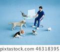 vet veterinarian veterinary 46318395
