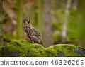 Eurasian eagle owl, Bubo bubo, siting on the rock 46326265