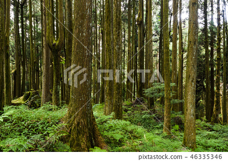 beautiful green forest background 46335346