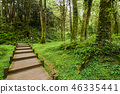 wooden walkway through in forest at morning 46335441