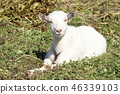 animal animals mountain 46339103