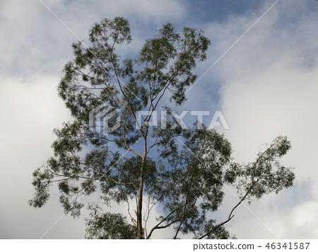 樹 46341587