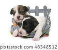 dog terrier pet 46348512