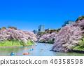도쿄 치도리가 후치의 벚꽃 46358598