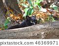 검은 고양이 46369971