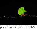Atta ants, Leafcutter Ants, Costa Rica 46370656