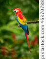 Red parrot (Macaw parrot) 46370788