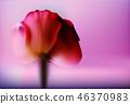 tulips tulip flower 46370983