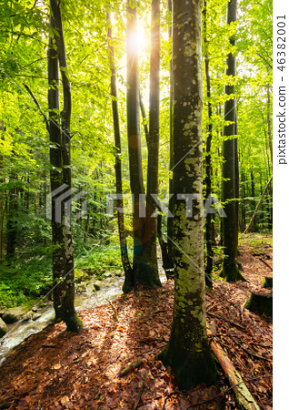 sunlight in summer forest 46382001