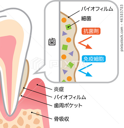 tooth, cross-section diagram, white background 46383783
