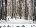 Forest at snowstorm 46388329