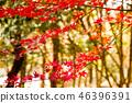 Autumn leaves 46396391