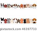 개들의 국경 전후 작은 강아지 46397733