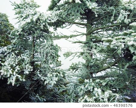 雪白樹 46398576