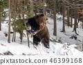 bear, forest, winter 46399168