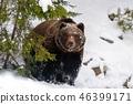 bear, forest, winter 46399171