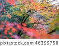 Autumn leaves 46399758
