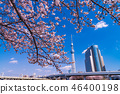 Near Sumida Park, the season of cherry blossoms 46400198