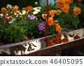 A flower 46405095