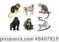 monkey, illustration, collection 46407819