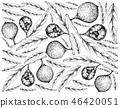 食物 食品 黃色 46420051