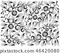 Hand Drawn Wallpaper of Kei Apple Fruits on White  46420080
