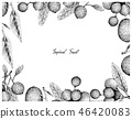 Hand Drawn Frame of Gold Apple and Hanza Fruits 46420083