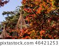 Kenrokuen的秋天 46421253