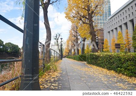 皇宮銀杏樹周圍 46422592