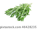 Fresh green rosemary isolated on a white background 46428235