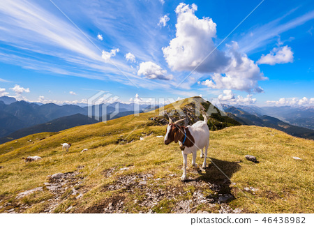 Goat on top of mountain 46438982