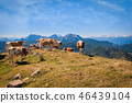 animal, cattle, cow 46439104