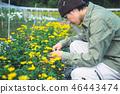 농업 화훼 재배 46443474