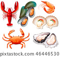 Set of seafood on white background 46446530