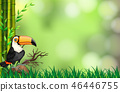 nature, toucan, background 46446755