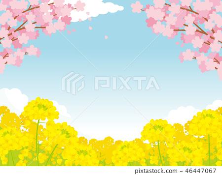 櫻花和強姦開花背景例證 46447067