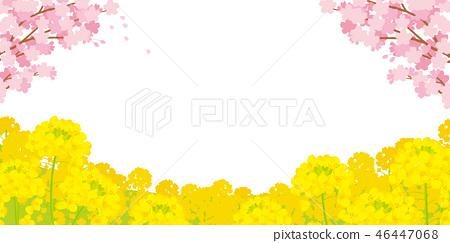 櫻花和強姦開花背景例證 46447068