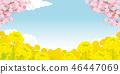 櫻花和強姦開花背景例證 46447069