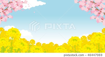 Cherry blossoms and rape blossoms background illustration 46447069