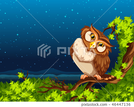 A owl at night 46447136
