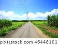ถนน Sugar Kohamajima 46448101
