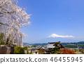 후지산과 만개 한 벚꽃 그리고 하늘을 나는 패러 글라이딩, 시즈오카 현 후지 노미야시 柚野에서 46455945