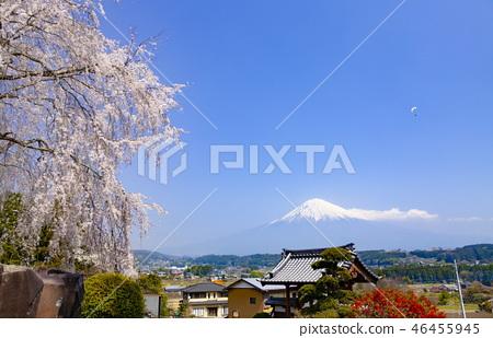 在靜岡縣富士宮市的Chino,與富士山一起盛開的櫻花和天空中的滑翔傘 46455945