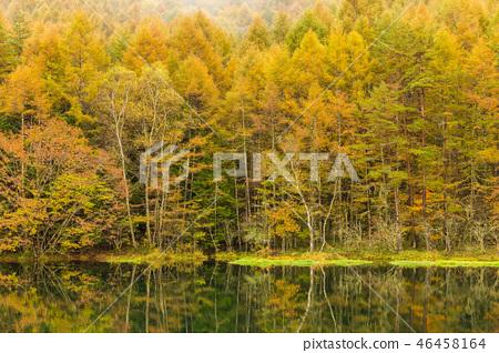나가노 안개 속에 하나님 射鹿 연못 46458164