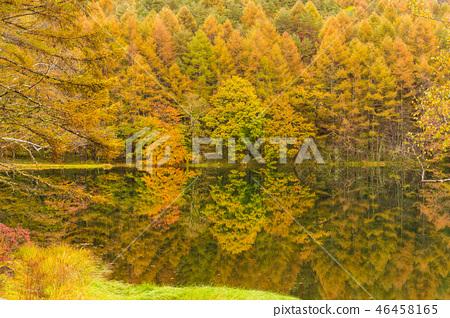 나가노 안개 속에 하나님 射鹿 연못 46458165