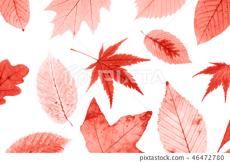 Many colorful autumn leaves isolated on white background. 46472780