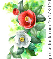 A red and white rose painted with watercolor 46473040