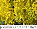 Golden shower 46473626